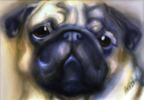 Ohai Imanother Pug by Neriah