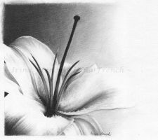 White Lily by Ameryn by twotonearmy