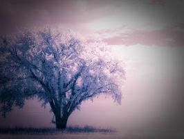 The Dreaming Tree by Pennes-from-Heaven