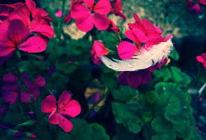 floating feather by jessica-jones