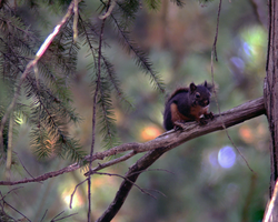 squirrel by Mackingster