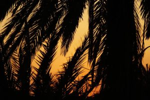 Palms by strangetofla