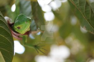 Reptile by AlonsoD1C