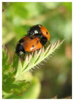 love of the nature by Insect-Lovers-Club