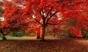 Reddy by wreck-photography