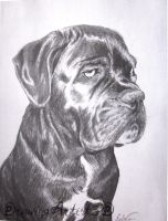 Dog Portrait 1 by DrawingArtist3D