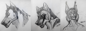 Sketches by the-MadDog