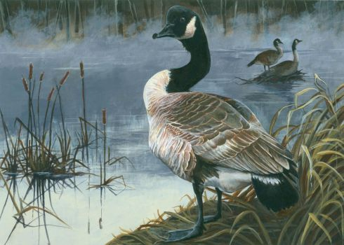 Duck Stamp Submission by PaperSpiders