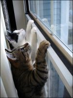 Bird Watching Kittens Pt2 by mydigitalmind