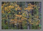 Fall leaves. 800-1968, with story by harrietsfriend