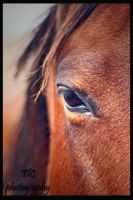Eyed equines by TlCphotography730