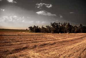 Harvest Field by samtheartman