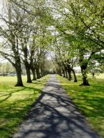 Christchurch - Spring pathway by paters87