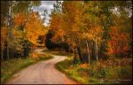 Autumn's Pathway by Sarah--Lynne