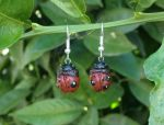Red Lady Bug Earrings by CaterpillarArts