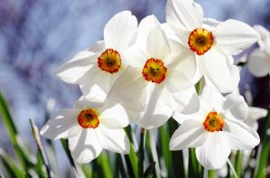 paper narcissus by right-angle