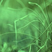 Onion Grass by SilentDistractions