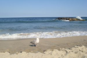 Seagull's domain by Laur720