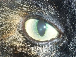Cat Eye by KillTheLights98