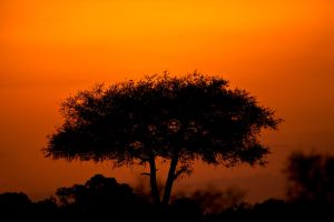 My Africa 28 by catman-suha