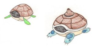 hard turtles - OLD by FrozenFeather