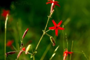 Pretty In Scarlet by BenTPhotos