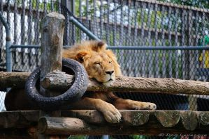 The King resting by imonline