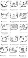 thumbnail storyboards by ninamo