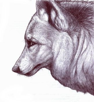Wolf Profile by nikkiburr