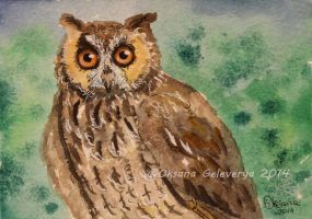 Watercolor and Ink #12 - Long-Eared Owl by Oksana007