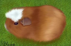 Guinea -speed paint- by Spottedfire94