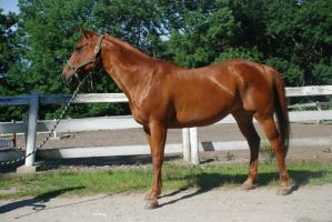 QH 17 by Spotstock