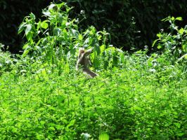 Wallaby in the wild by Wolfie-83