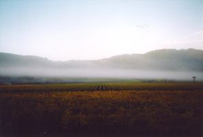 Ballooning over Napa 5 by 6Hammer6