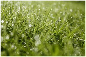 after the rain by nooraviiva