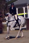 Showjumping 354 by aussiegal7
