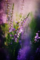 Heather Mix by Justine1985