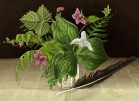 Native Plants and Feather by cambium