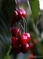 Cherries by WalkingOnAir18