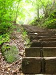 forest-stairs by petite-ange