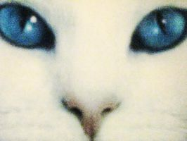 White cat by Kishis
