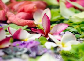 a pool of flowers by miades