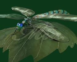 3-D dragonfly by EmiliaPaw5