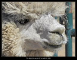 The alpaca-lips are here! by Eolhin