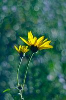 Yellows by Justine1985