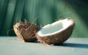 Coconut by narendra36