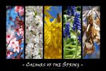 Colours of the Spring by Allerlei