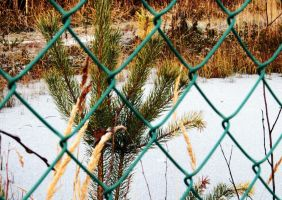 frozen lake behind bars by Luba-Lubov-13