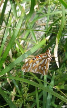Butterfly Photo 2 by dragonsyth1