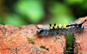 Caterpillar on a brick by reubenteo